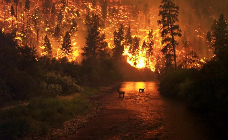 Time for a Forest Fire.  Burn Down the GOP!